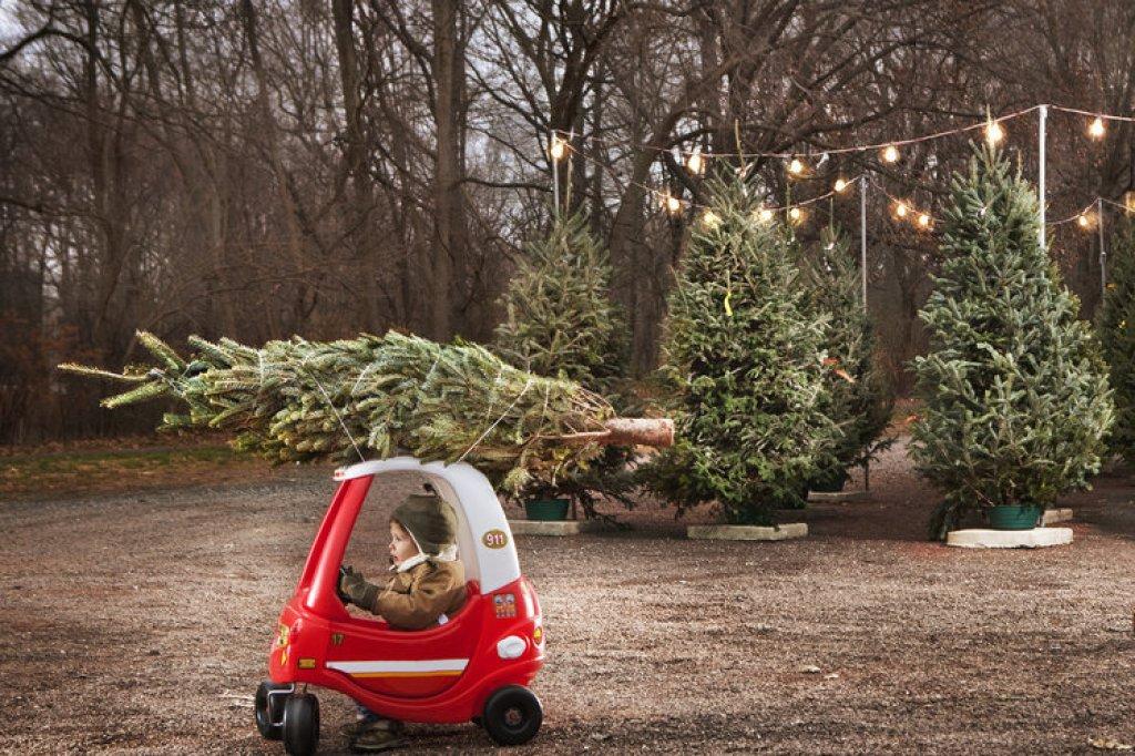weihnachtsbaum abholung berlin treptow europ ische weihnachtstraditionen. Black Bedroom Furniture Sets. Home Design Ideas