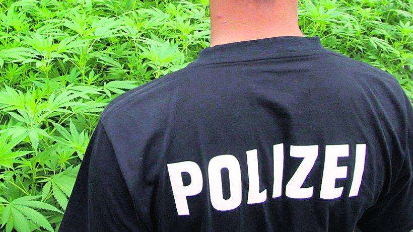 polizei hebt cannabis-plantage in wohnung aus