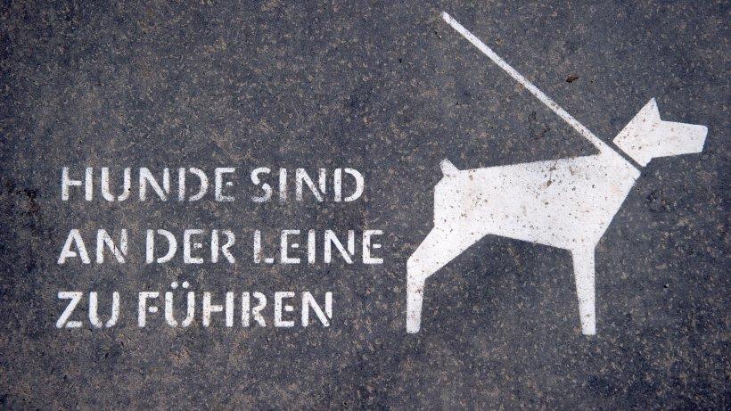 neues gesetz berliner hunde m ssen an die leine berlin. Black Bedroom Furniture Sets. Home Design Ideas