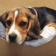 Das Hundegesetz könnte scheitern