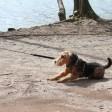 Das Hundeverbot auf den Uferwegen von Schlachtensee und Krummer Lanke, das der Bezirk Steglitz-Zehlendorf am 15. Mai 2015 erlassen hatte, ist wieder aufgehoben
