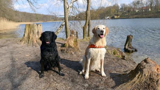 Seit Dezember 2015 dürfen Hundehalter wieder mit ihren angeleinten Tieren am Schlachtensee spazieren gehen. Ab dem 15. April 2016 soll die neue saisonale Regelung in Kraft treten. Dann ist der Uferweg während der Sommermonate für Hunde tabu
