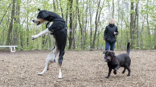Zwei Hunde am Mittwoch im Hundegarten Moabit
