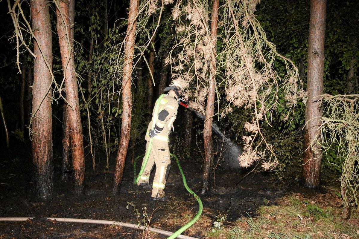 Blaulicht-Blog: Waldstück in Köpenick steht in Flammen