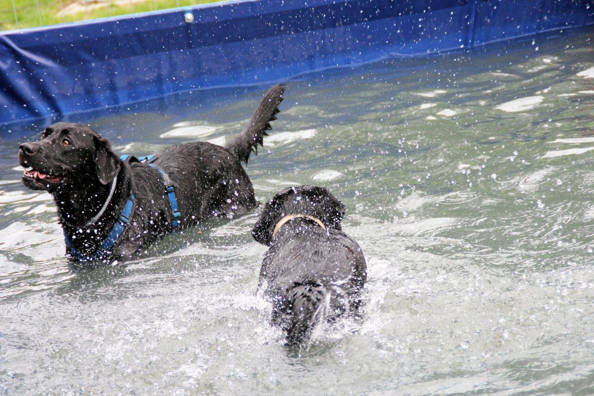 Hundetag im Tierpark: Ab in den Pool