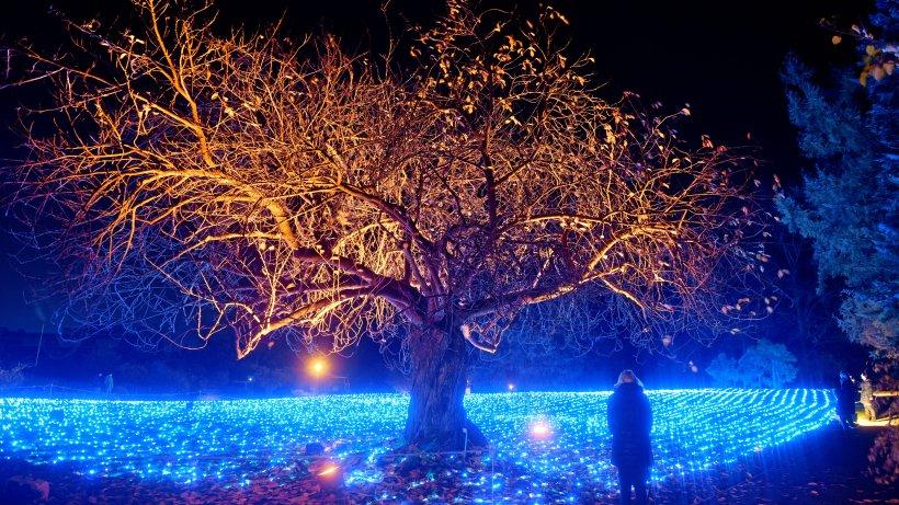 Christmas Garden im Botanischen Garten - die schönsten Bilder