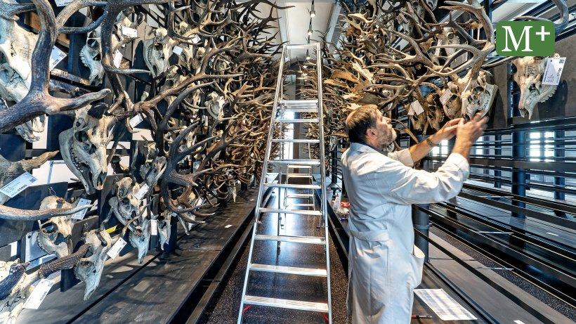 Das Berliner Naturkundemuseum expandiert - Berliner Morgenpost