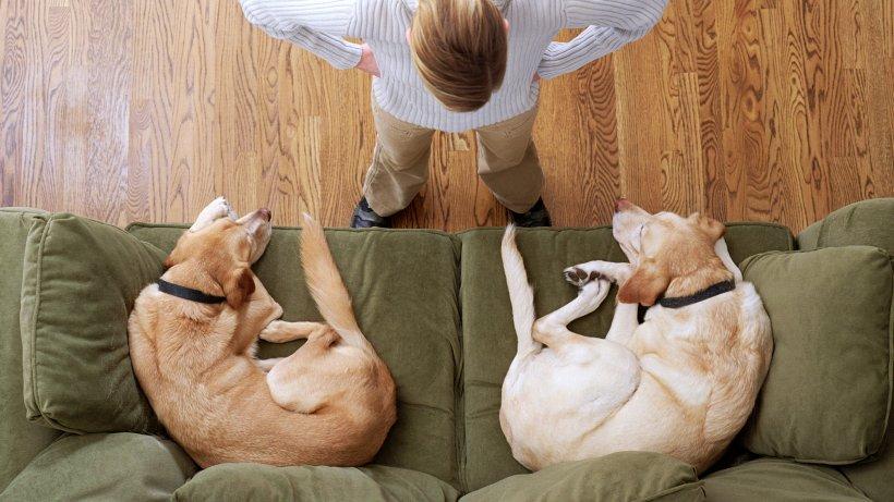 Was Hunde wirklich denken