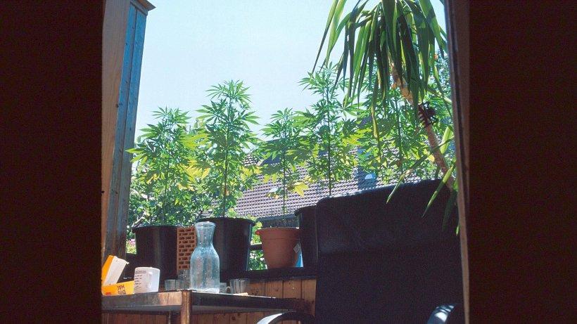 Cannabis Aus Dem Wohnzimmer
