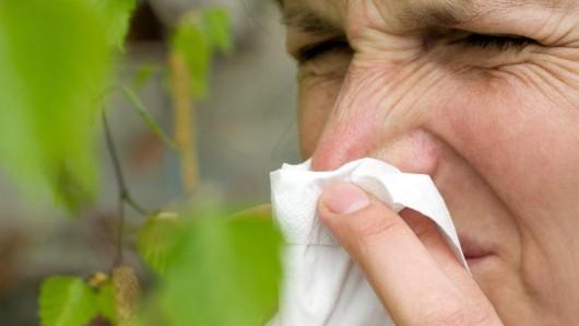 Die aggressiven Pollen der Birke sind bei Heuschnupfengeplagten gefürchtet