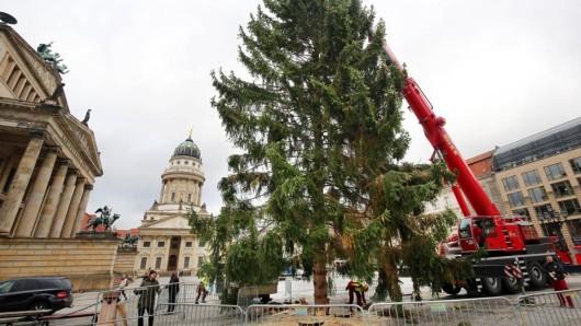 Mit einem Kran wird der Weihnachtsbaum auf dem Gendarmenmarkt aufgestellt