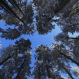 200 Bäume müssen bis Ende Februar gefällt werden