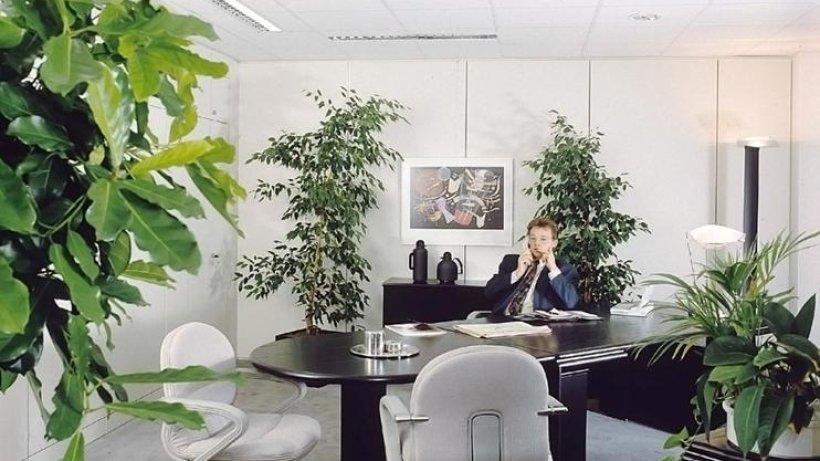 Zimmerpflanzen k nnen allergie ausl sen immobilien berliner morgenpost - Zimmerpflanzen berlin ...