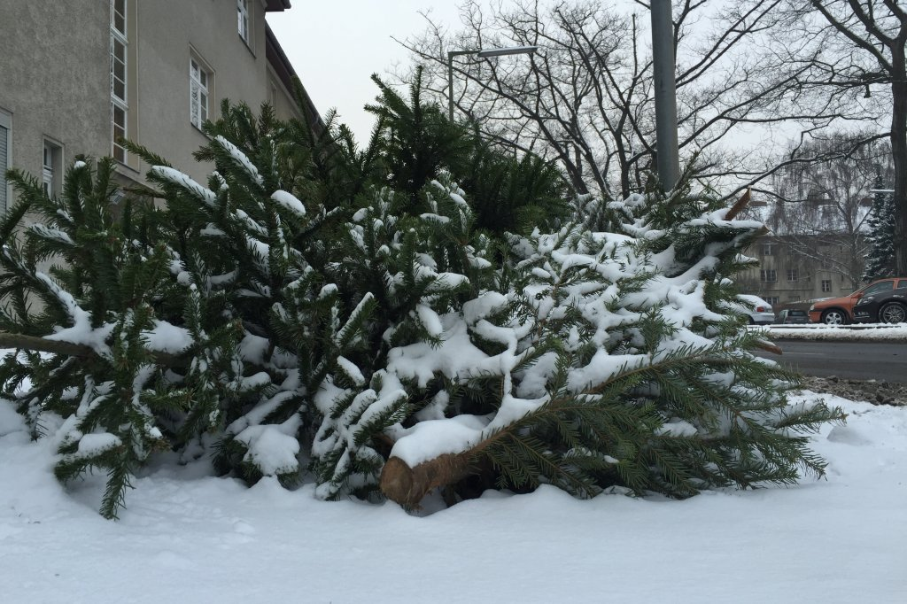 Weihnachtsbaume berlin hohenschonhausen
