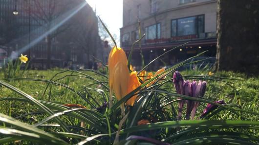 Osterblumen am Kudamm in Berlin: Am Sonntag zeigt sich die Stadt von ihrer sonnigen Seite.
