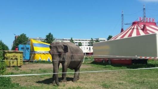 Elefantendame Maya lebt jetzt auch noch allein im Zirkus