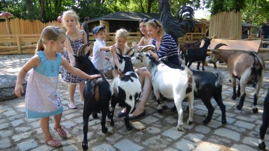 Auf dem insgesamt knapp 3.500 Quadratmeter großen Bereich treffen Besucher nicht nur Kühe und Schweine, sondern auch Schafe, Ponys und Ziegen