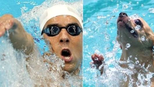 So würde Michael Phelps wahrscheinlich als Hund aussehen.