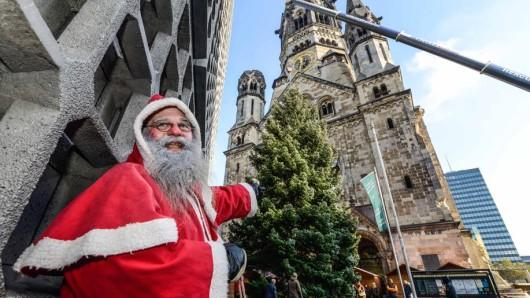 Der schönste Baum der Stadt: Oberweihnachtsmann Frank Knorre preist das tadellose Exemplar mit überschwänglichen Worten
