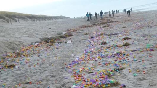 Angespülte Eier am Strand von Langeoog