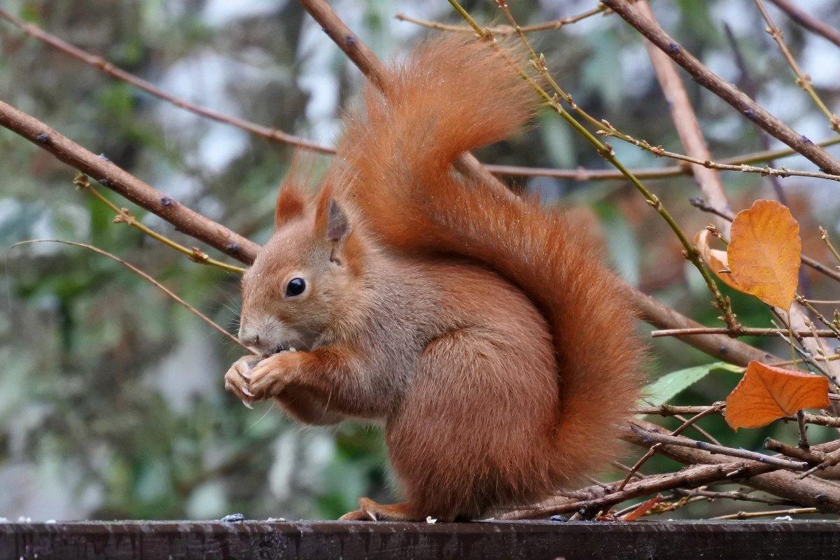 Kleistpark in Schöneberg: Eichhörnchenbrücke kommt nun doch nicht - Der Grund ist skurril