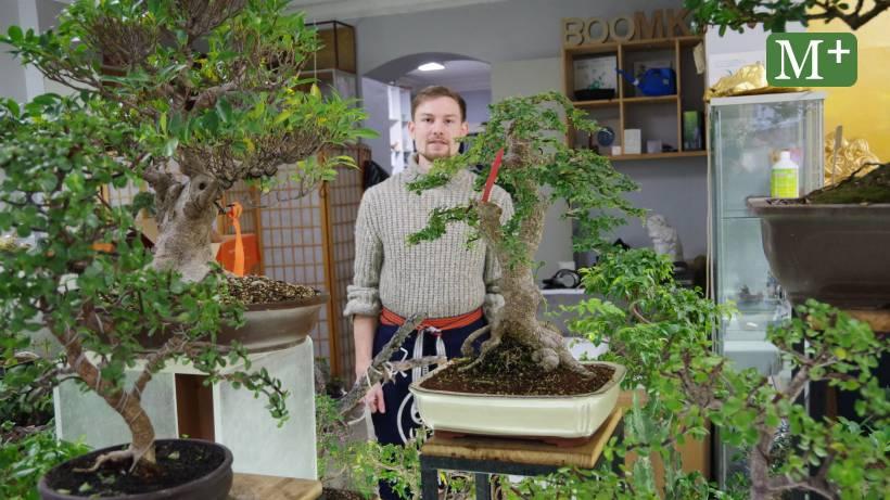 Die Grosse Liebe Zu Den Kleinen Baumen Berliner Morgenpost
