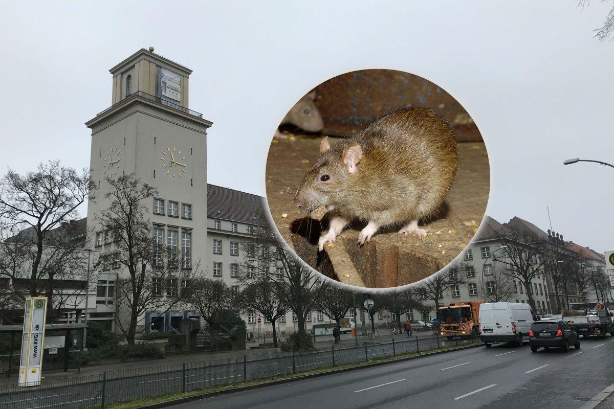 Stromausfall im Rathaus Tempelhof: Sind Ratten schuld?