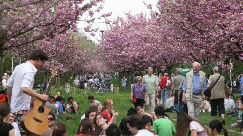 Teltow sagt Kirschblütenfest ab: Leag stoppt