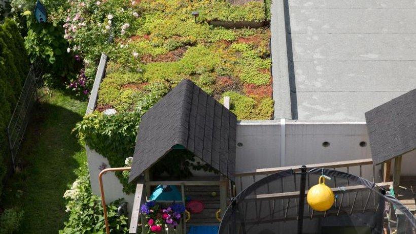 pflanzen-statt-kies-flachdach-der-garage-einfach-begr-nen