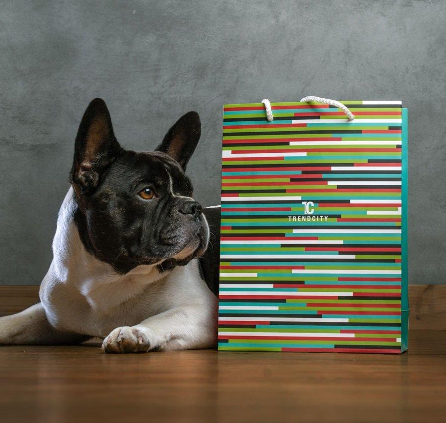 Ganz entspannt – TRENDCITY Bürohund Murphy.