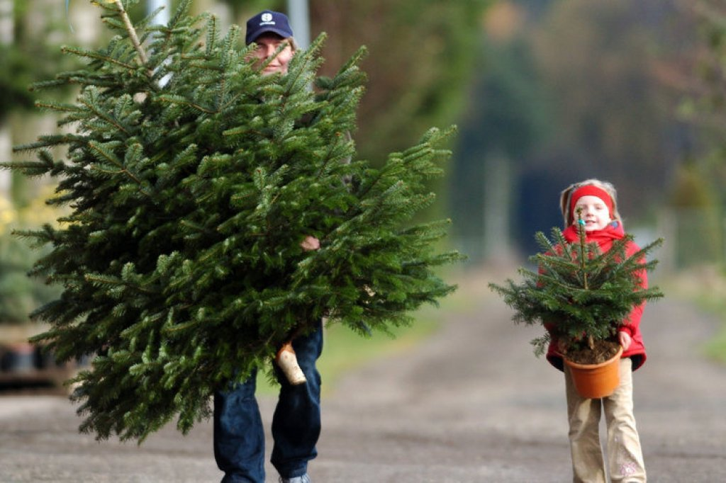 Weihnachtsbaum kaufen berlin moabit