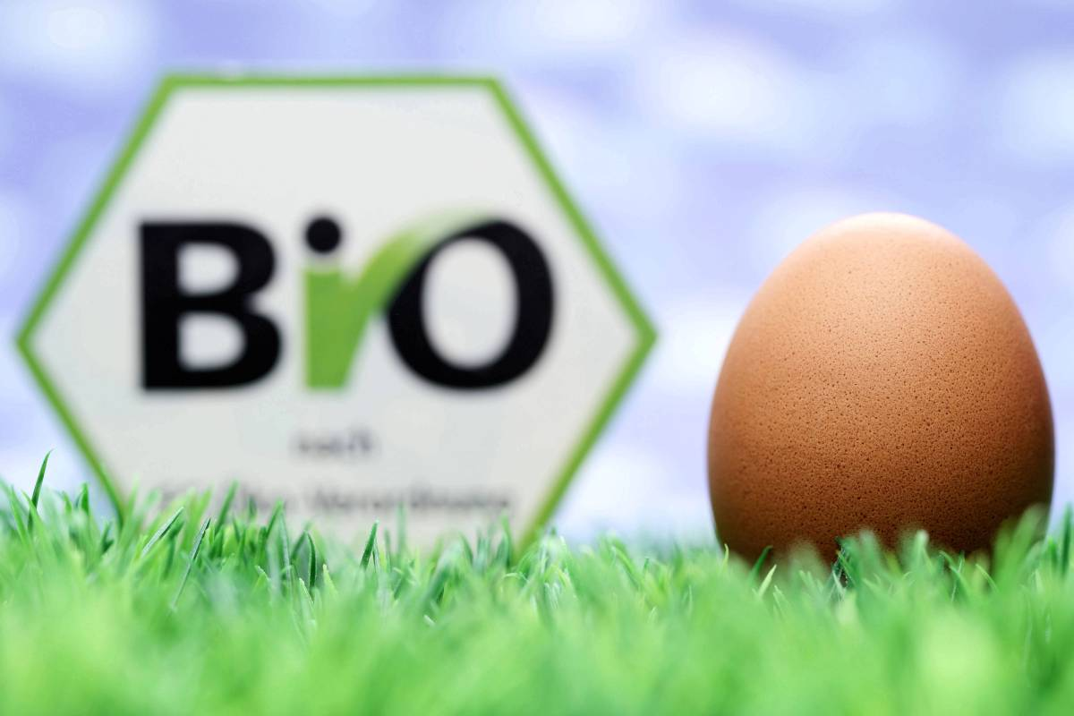 1dcf7c091f31ba Ökobarometer 2018: Bei Bio-Lebensmitteln ticken Männer und Frauen anders -  Politik - Berliner Morgenpost