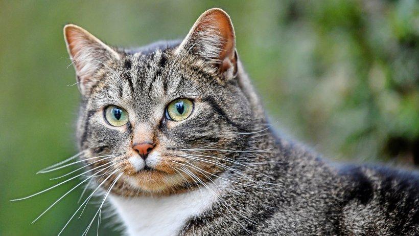 Hund und Katze mit Corona infiziert - erstmals offiziell gemeldet