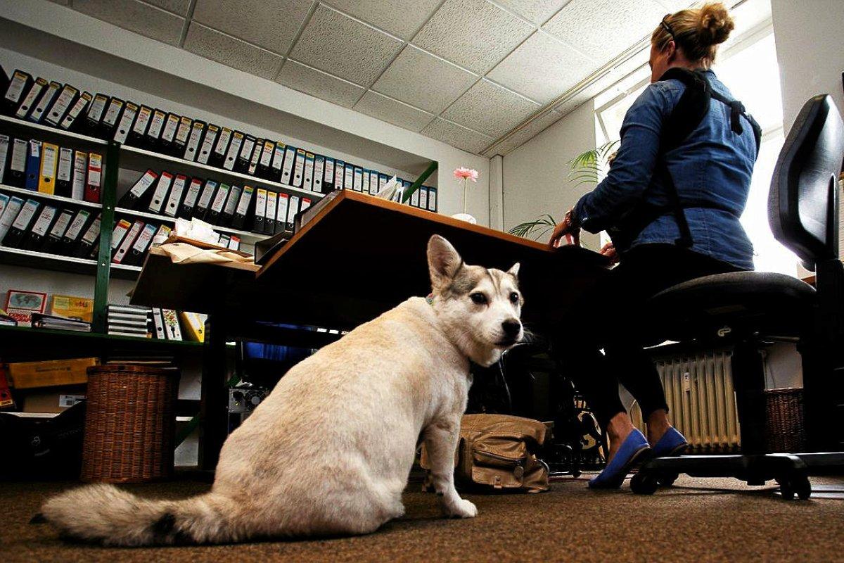 Spandauer will sich für Bürohunde im Rathaus einsetzen