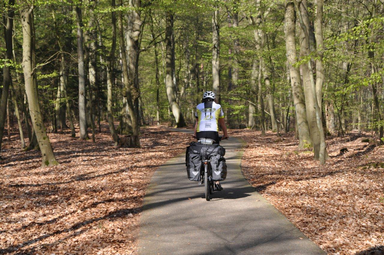 Bei Grumsin geht es durch UNESCO-geschützte Wälder.