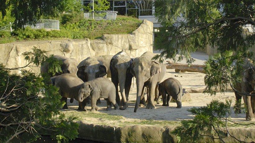 Elefantenpark Brandenburg
