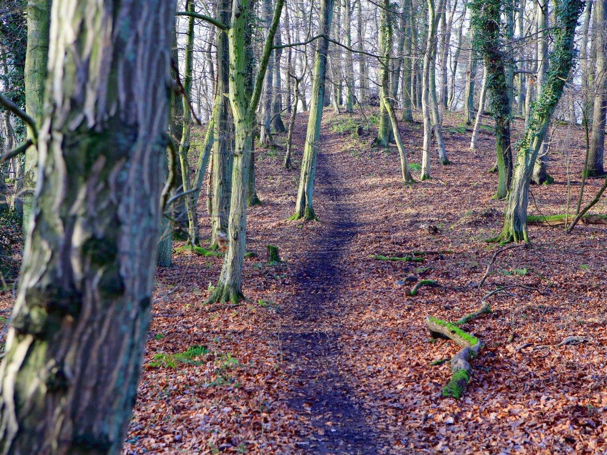 Wald leben im nackt nackt im