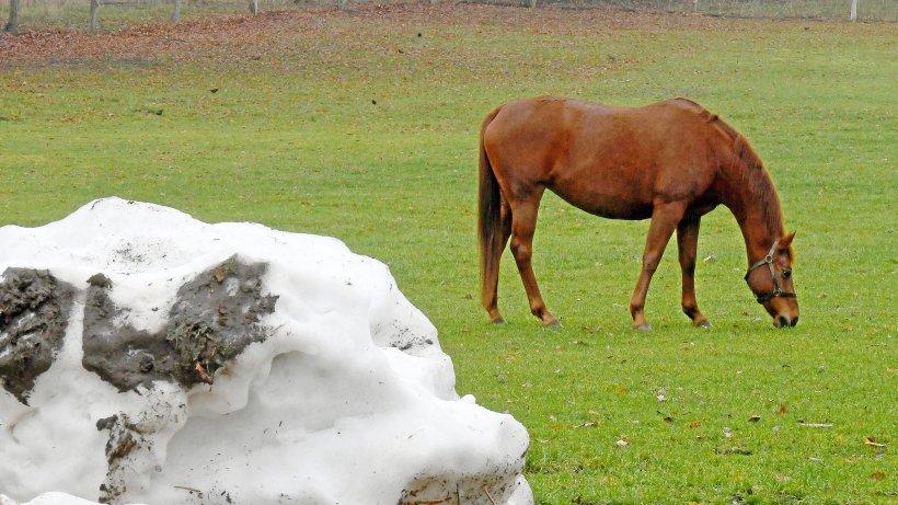 Pferd: Stute in Hessen vergewaltigt, Polizei macht widerlichen Fund - Belohnung von Peta
