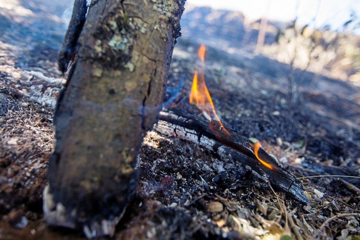 Feuer auf Gran Canaria: Reisewarnung wegen Waldbrand? So reagieren Veranstalter