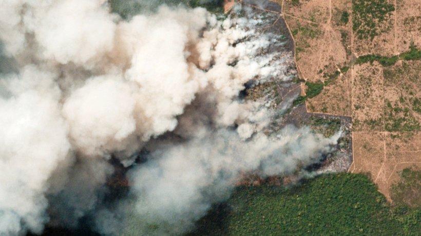 Warum brennt der regenwald