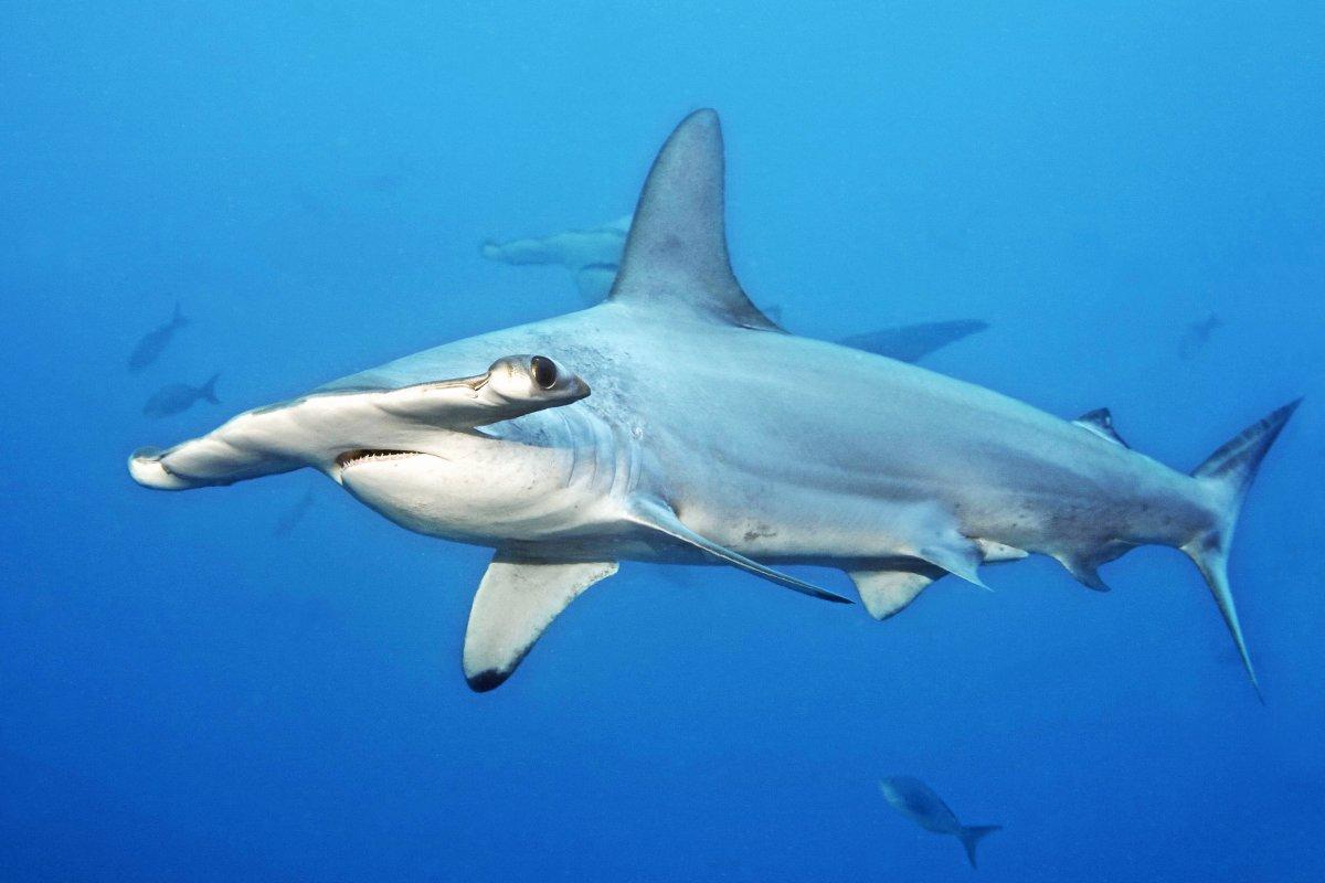 Teneriffa: Hai taucht plötzlich aus Meer auf - Reaktion der Touristen überrascht